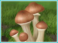 """""""Лесные грибы"""""""