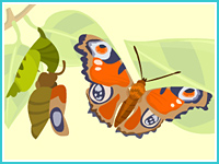 """""""Вырасти бабочку"""""""